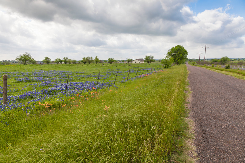 Field of wildflowers and Texas Bluebonnets near Whitehall, Texas.