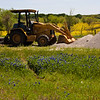 Tractor in a patch of Texas Bluebonnet wildflowers, Lupinus texensis, along farm-to-market roads in Southeast Texas in the spring.