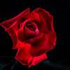 flowers_barath_2019_211