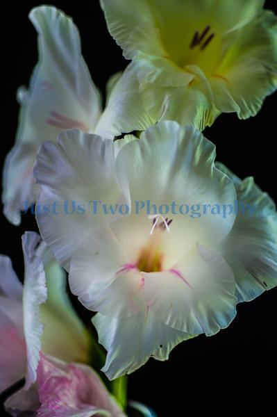flowers_barath_2019_97