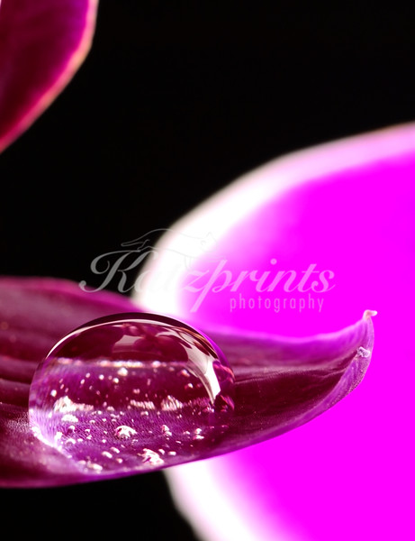 Close-up of a waterdrop on an orchid leaf