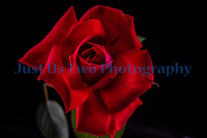 flowers_barath_2019_193