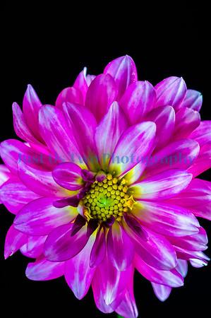 flowers_barath_2019_33-2