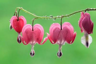 Hearts & Drops