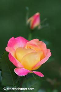 Bloom in Waiting