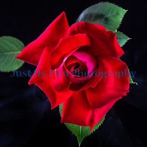 flowers_barath_2019_156