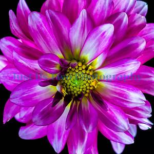 flowers_barath_2019_33