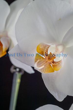 flowers_barath_2019_17