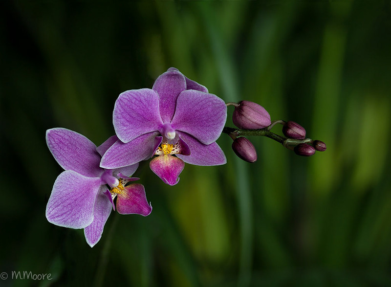 Floating, Orchid, 1