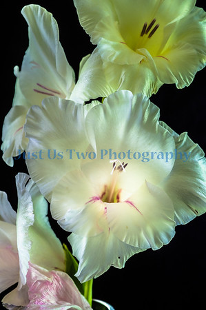 flowers_barath_2019_95