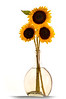 SunFlower-