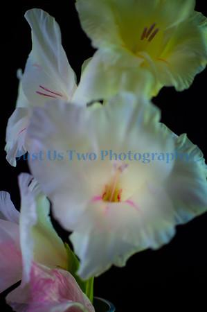 flowers_barath_2019_98