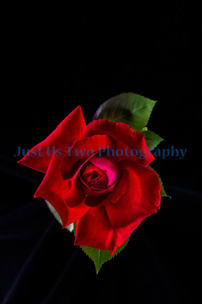flowers_barath_2019_191