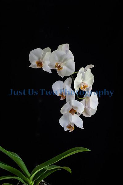 flowers_barath_2019_9