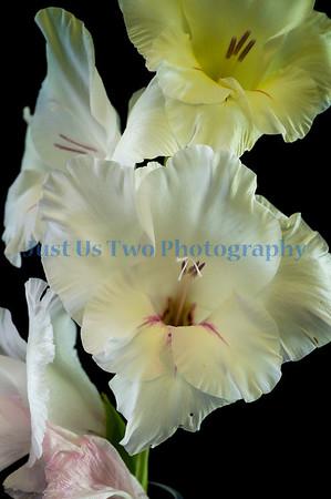 flowers_barath_2019_93