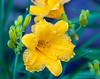 Flower - MLD