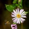 Bee Dazed