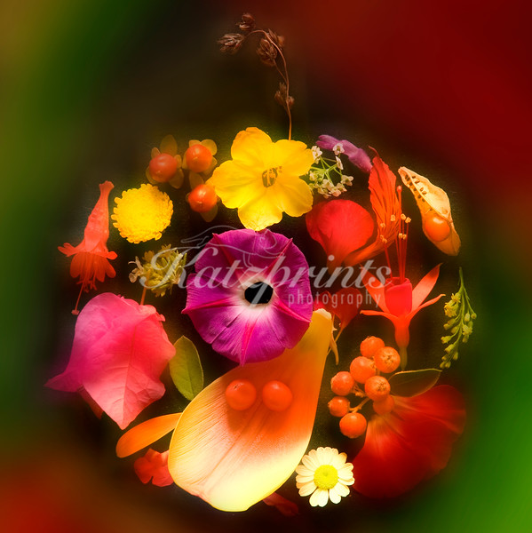 This is a photograph of flowers from my garden arranged as a globe. It works well in many formats, from canvas print to birthday card.