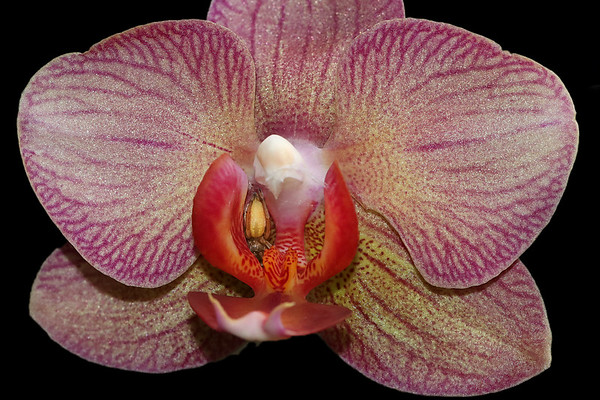 Orchid with a tiny spider
