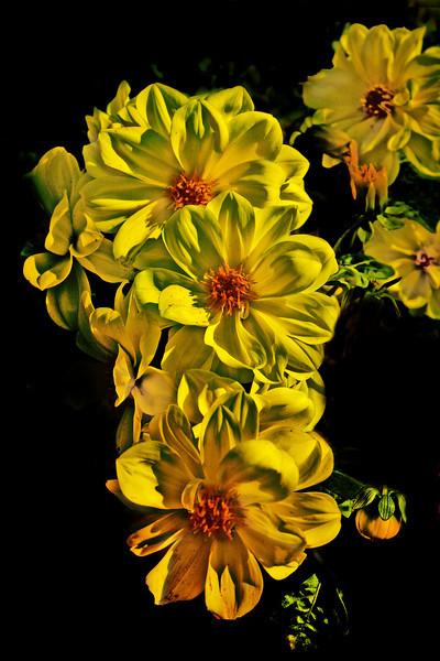 Yellow HDR