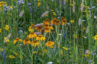 Meadow Flowers Near Crested Butte Colorado #2