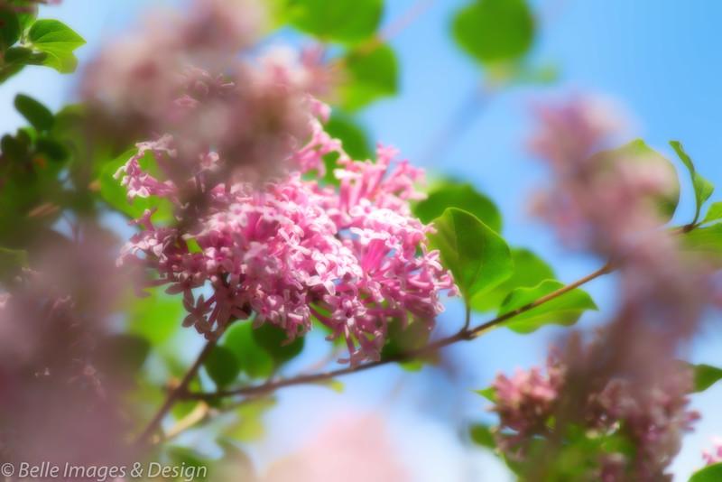 Spring Kissed
