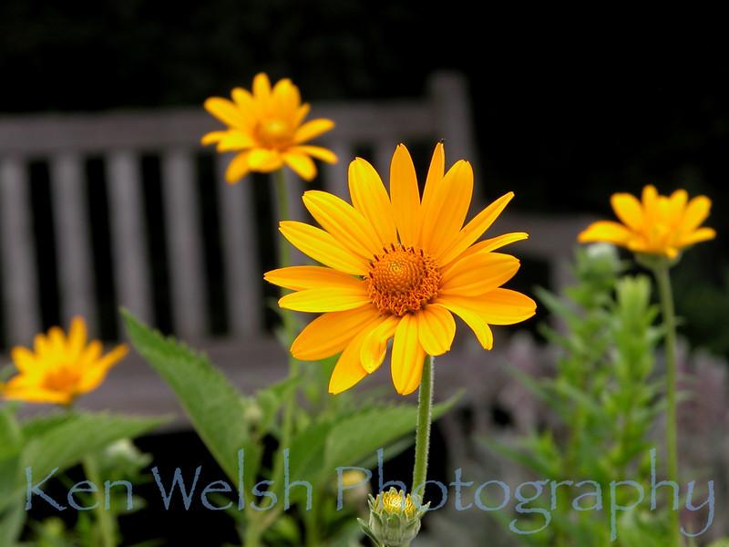 Chicago Botanical Gardens  © Copyright Ken Welsh