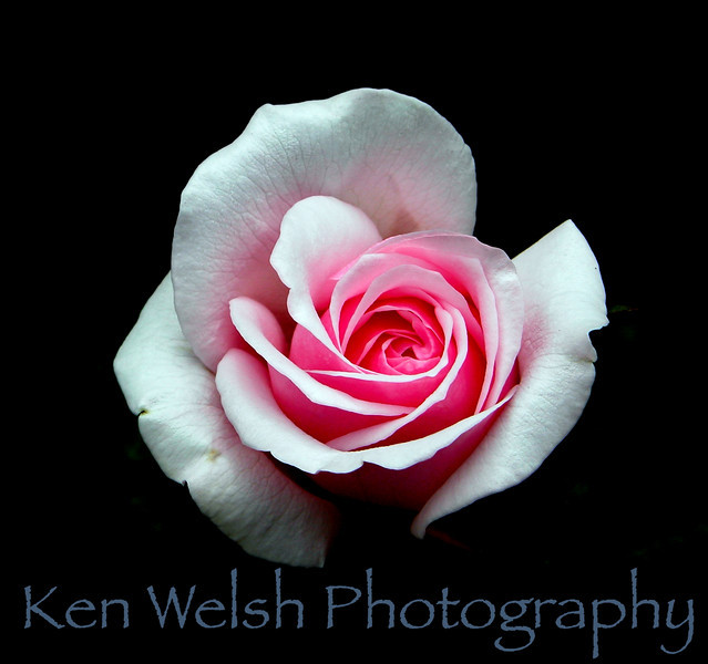© Copyright Ken Welsh