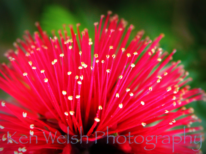 National Botanical Gardens of Wales   © Copyright Ken Welsh