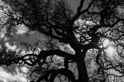 Sunlight and Oak