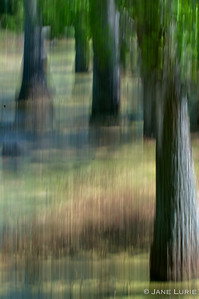 Pan Shot of Swamp and Tree Trunks. Love the painterly effects that a slight movement of the camera makes.