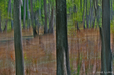 Pan shot of swamp and trees.