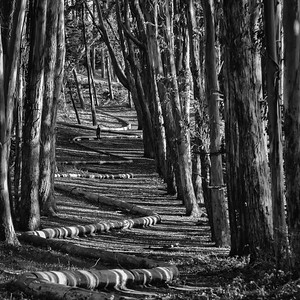 Walking the Wood Line, Presidio