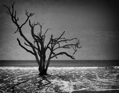 Boneyard Beach, Edisto