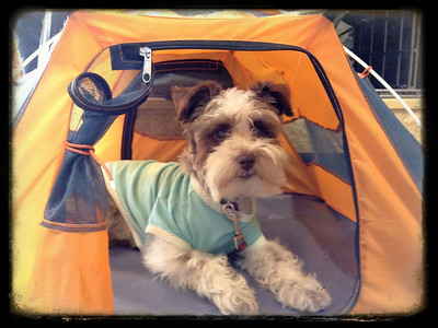 Mama says good boy gets his own camping tent but REI says it's not for sale !