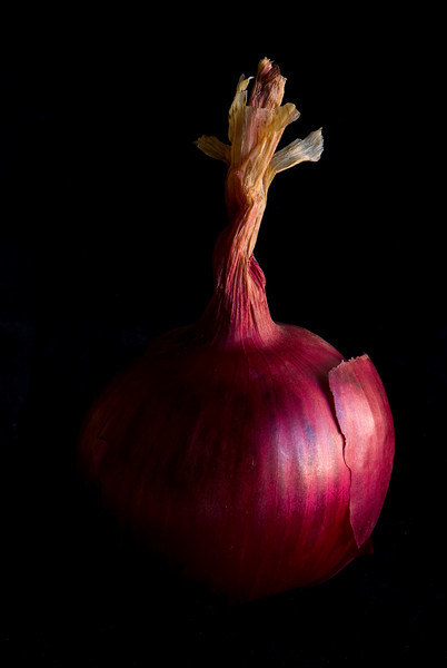 Standing Red Onion<br /> All photographs are printed on high quality, professional Kodak metallic paper, unmatted, and shipped to you unframed so that you may choose your own matting and framing materials. <br /> The following sizes are available unmatted:<br /> Unmatted prices:<br /> 8 x 10  $35<br /> 11 x 14  $50<br /> 16 x 20  $75<br /> 20 x 24  $100