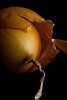 Autumn Onion<br /> All photographs are printed on high quality, professional Kodak metallic paper, unmatted, and shipped to you unframed so that you may choose your own matting and framing materials. <br /> The following sizes are available unmatted:<br /> Unmatted prices:<br /> 8 x 10  $35<br /> 11 x 14  $50<br /> 16 x 20  $75<br /> 20 x 24  $100