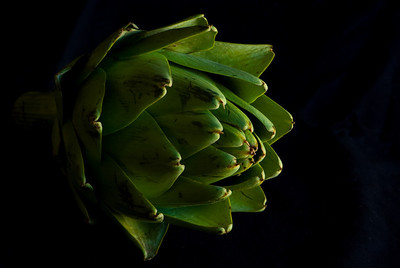 Artichoke All photographs are printed on high quality, professional Kodak metallic paper, unmatted, and shipped to you unframed so that you may choose your own matting and framing materials.  The following sizes are available unmatted: Unmatted prices: 8 x 10  $35 11 x 14  $50 16 x 20  $75 20 x 24  $100