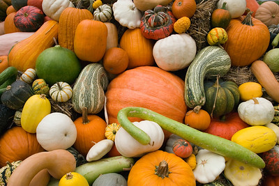 Pumpkins, squash and gourds galore.
