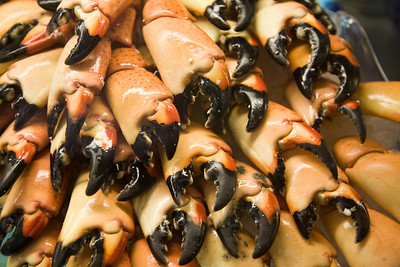 Stock Photo of Market Display of Stone Crab Claws