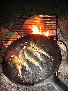 fresh trout on an open fire