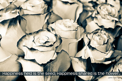 4838-101_HappinessHeldIs