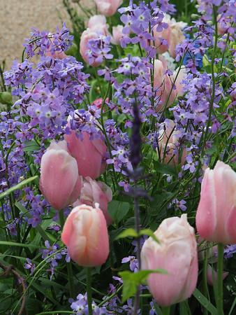 Monet's Garden, Givinchy, France