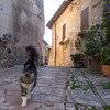 Hill Towns of Umbria -9