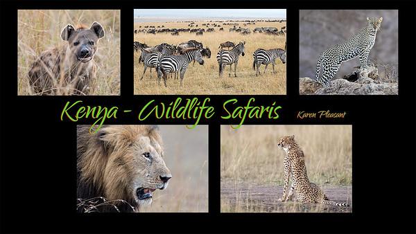 Kenya - Wildlife Safaris