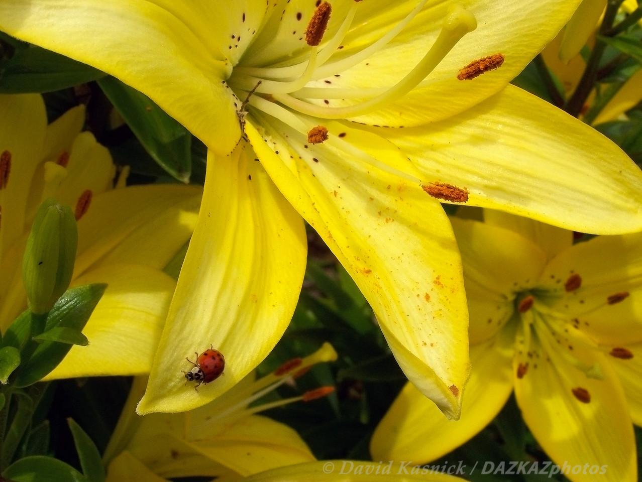 Buggin' - Backyard Garden