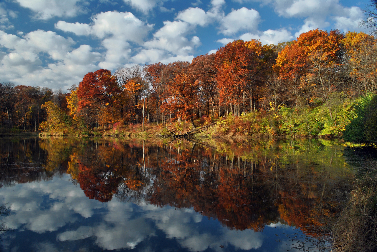 Fall Colors With Cloudy Sky - Morton Arboretum