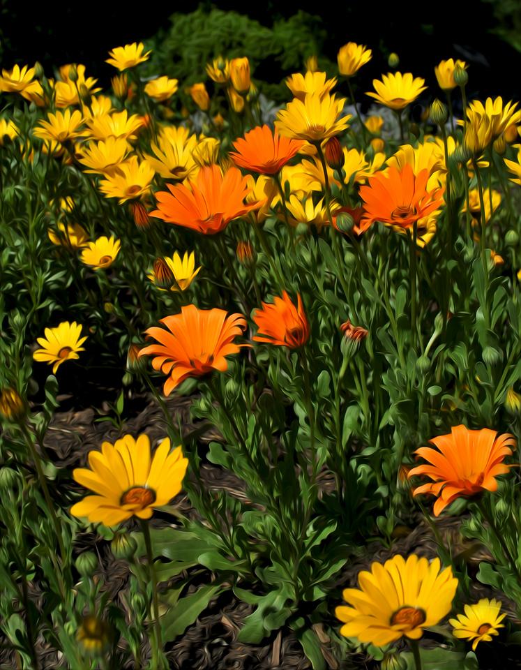 Summer Flowers - Missouri Botanical Gardens - St. Louis, MO