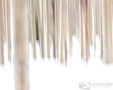 """ASPEN ABSTRACT II""Dixie National Forest, UTSlight intentional camera motion during the exposure creates an abstract image of a forest of aspen trees in several feet of fresh snow.© Chris Moore - Exploring Light PhotographyPURCHASE A PRINT"
