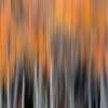Brushed Autumn III